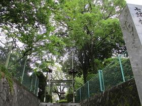 20166島田神社北側.JPG