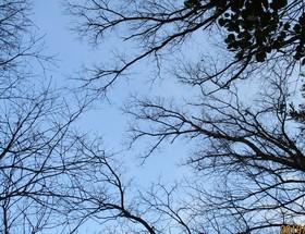 201927樹と青.JPG
