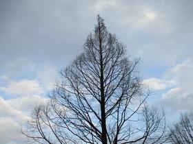 2019322樹.JPG