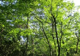 201954樹.JPG