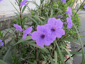 201992紫花.JPG