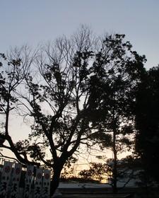 20201227夜明け.JPG