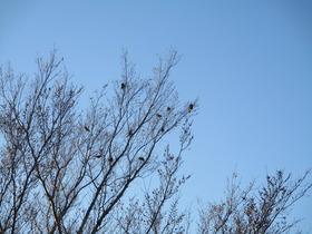 2020211樹と小鳥.JPG