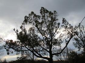 2020213樹.JPG