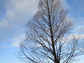 2020218冬樹.JPG