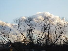202025冬樹と「雲.JPG