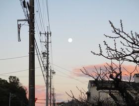 2020311朝満月.JPG