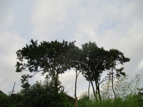 202071樹.JPG