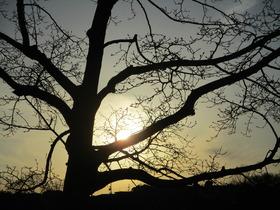 20210125夕焼けと樹.JPG