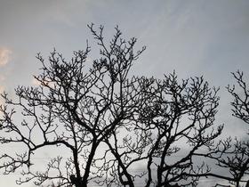 20210309春先の樹.JPG