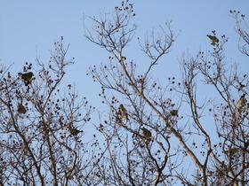 20210319小鳥たち.JPG