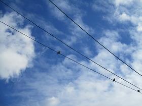 2021110青空と雀.JPG