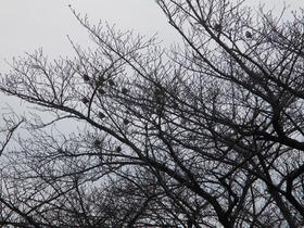 2021111冬の樹.JPG